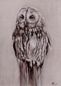 Hannah twine owl drawing